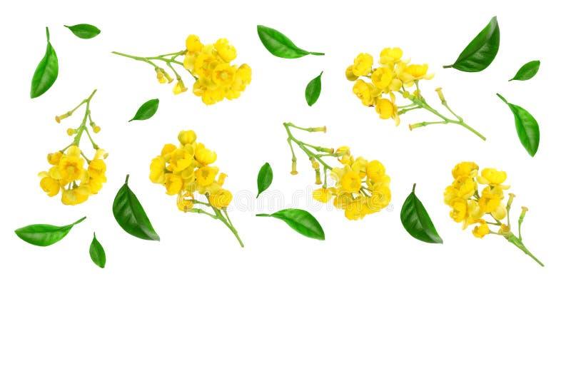 Flores de bérberos con las hojas aisladas en el fondo blanco Visión superior Modelo plano de la endecha stock de ilustración