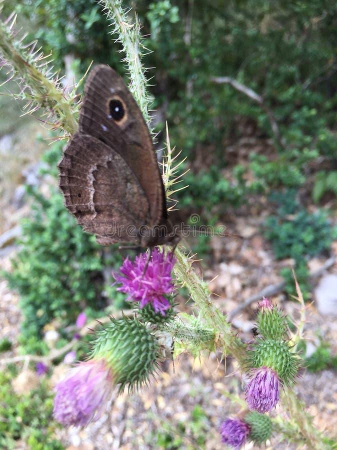 Flores de borboleta 2 imagem de stock