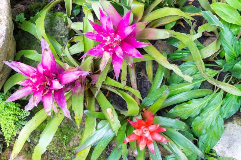 Flores de Bromeliad fotografía de archivo