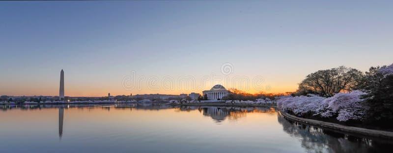 Flores de cereja do Washington DC foto de stock