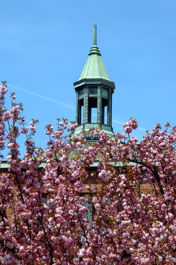 Flores de cereja e Steeple fotos de stock