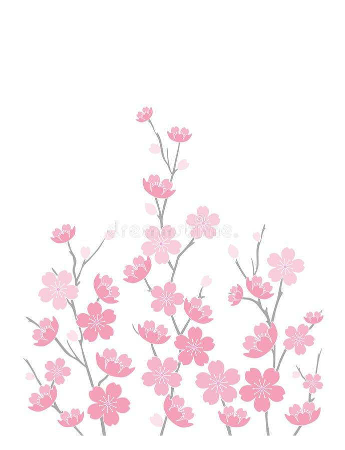 Flores de cereja no branco ilustração do vetor