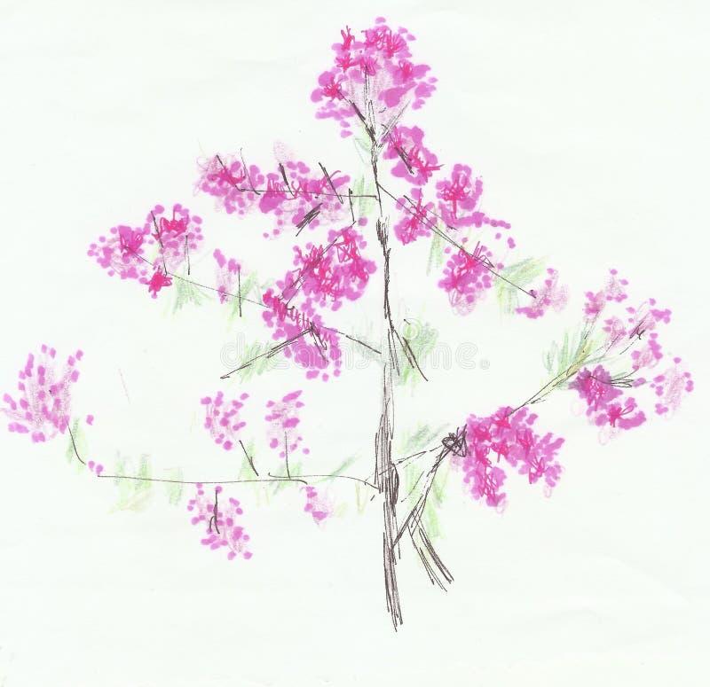 Flores de cerejeira cor-de-rosa no galho ilustração stock