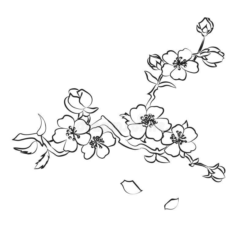 Flores de cerejeira do galho ilustração stock