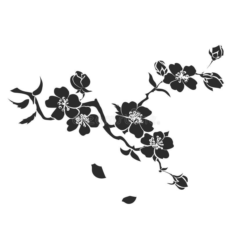 Flores de cerejeira do galho ilustração royalty free