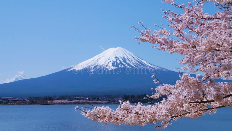Flores de cerejeira e Monte Fuji que são vistos de Laka Kawaguchiko em Yamanashi, Japão fotografia de stock royalty free