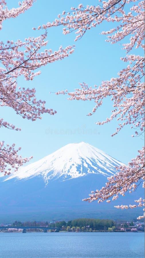 Flores de cerejeira e Monte Fuji que são vistos de Laka Kawaguchiko em Yamanashi, Japão imagens de stock royalty free