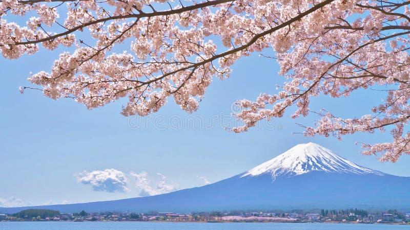 Flores de cerejeira e Monte Fuji que são vistos de Laka Kawaguchiko em Yamanashi, Japão imagem de stock royalty free