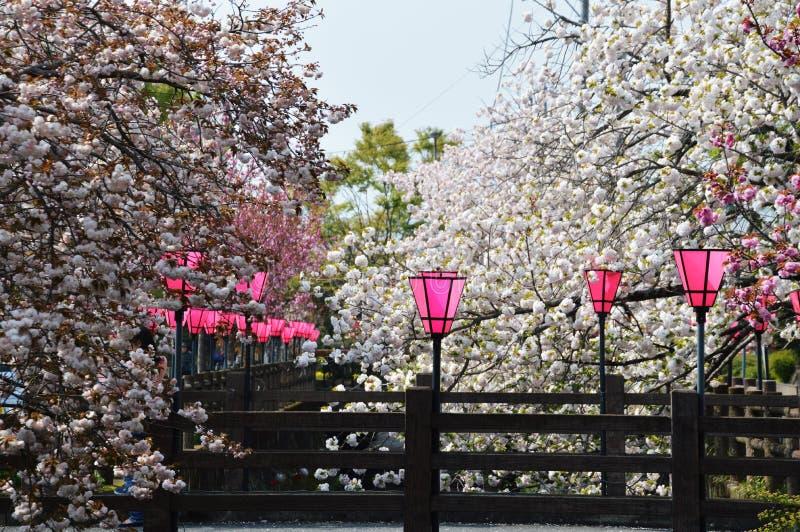 Flores de cereza dobles imágenes de archivo libres de regalías