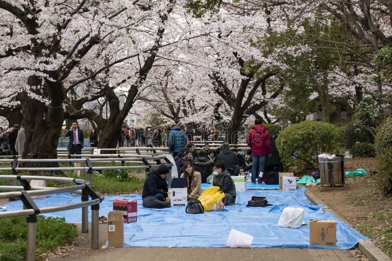 Flores de cereza en Tokio imagen de archivo