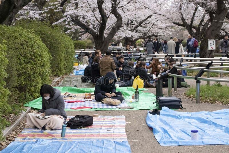 Flores de cereza en Tokio imagenes de archivo