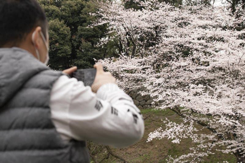 Flores de cereza en Tokio imagen de archivo libre de regalías