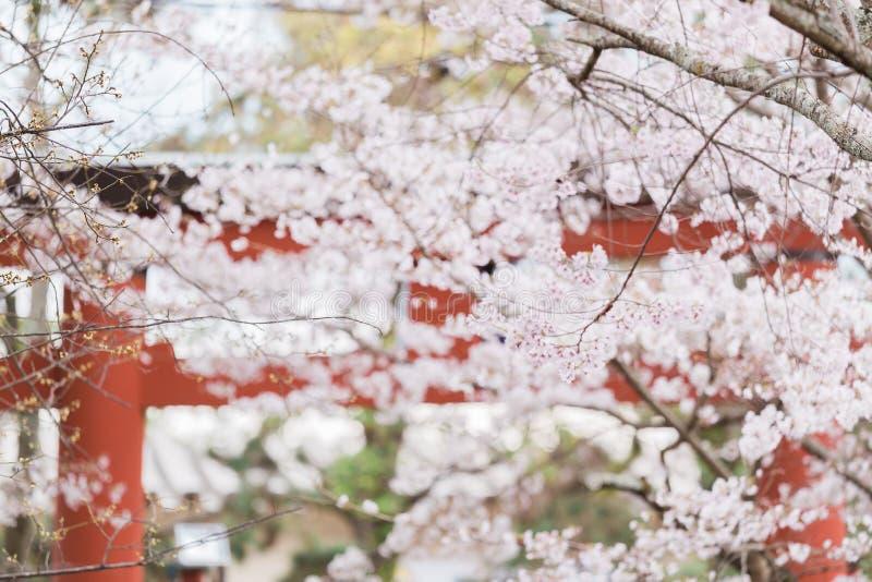 Flores de cereza japoneses fotos de archivo