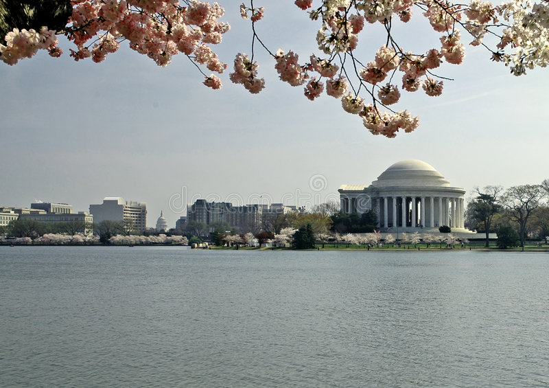 Flores de cereza y monumento de Jefferson