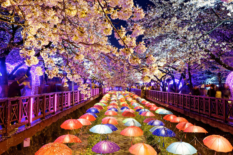 Flores de cerezo, ciudad de Busán en Corea del Sur imagen de archivo libre de regalías