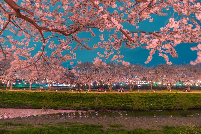 Flores de cerezo en la noche foto de archivo libre de regalías