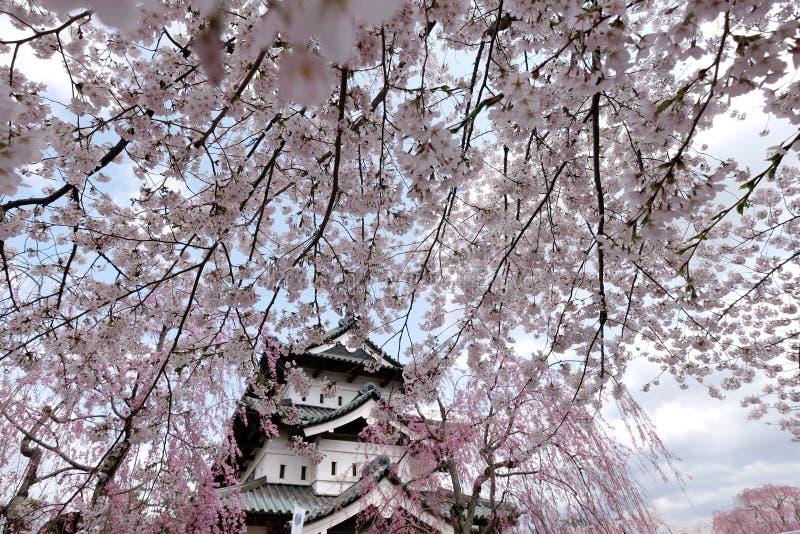 Flores de cerezo y castillo japoneses de Hirosaki, Aomori, Japón foto de archivo