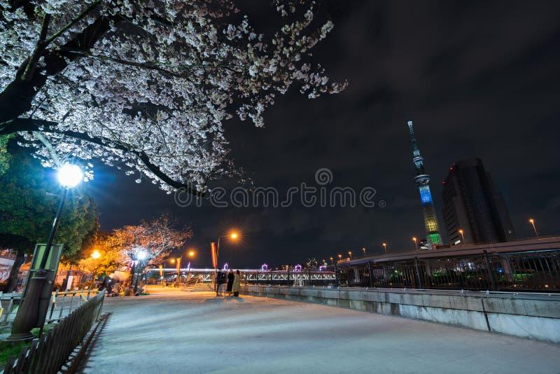 Flores de cerezo y luz-para arriba en el parque en la noche, Tokio, Jap?n de Sumida fotos de archivo libres de regalías