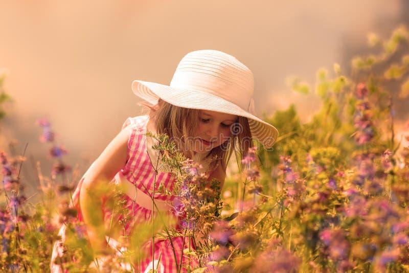 Flores de cheiro imagem de stock