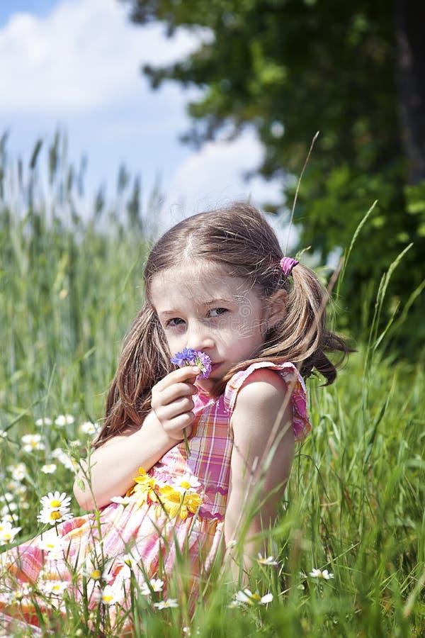 Flores de cheiro da rapariga imagem de stock royalty free