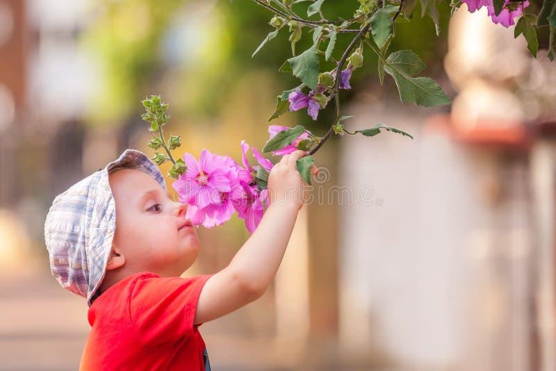 Flores de cheiro do menino bonito fotos de stock
