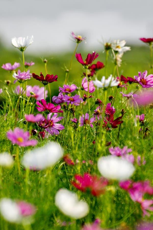 Flores de Colorfull en campo fotos de archivo
