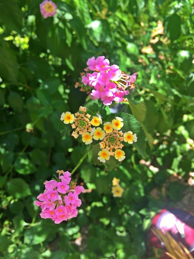 Flores de Colrful fotografia de stock royalty free