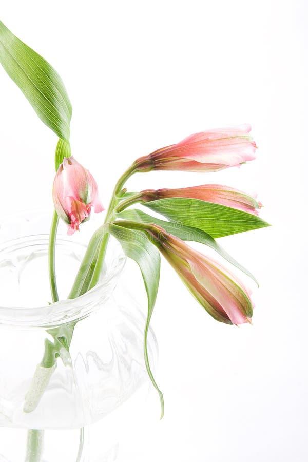 Flores de corte imágenes de archivo libres de regalías