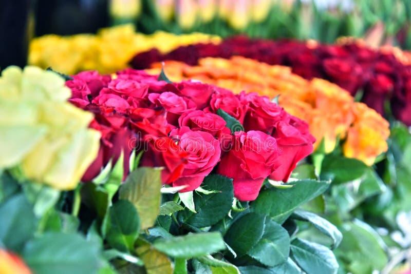 Flores de corte no florista fotografia de stock
