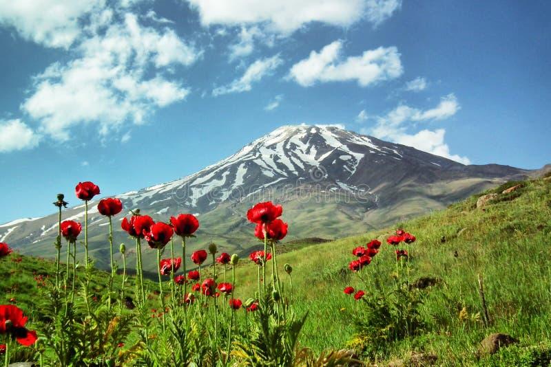 Flores de Damavand e de Papaver, Irã fotografia de stock