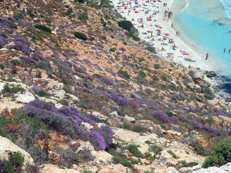 Flores de Erica y de la playa con muchos bañistas en el verano fotografía de archivo libre de regalías