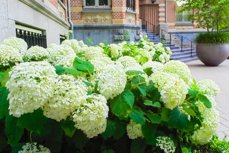 Flores de florescência ao lado da entrada do vondelpark foto de stock