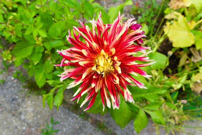 Flores de florescência ao lado da entrada do vondelpark imagem de stock