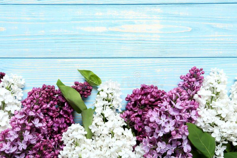 Flores de florescência do lilac foto de stock