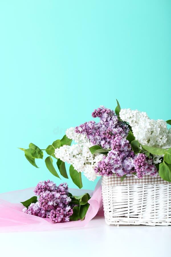Flores de florescência do lilac imagem de stock