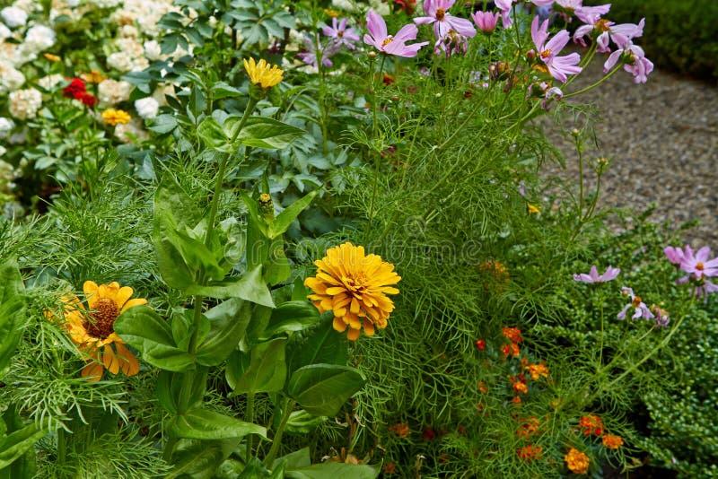 Flores de florescência do verão em Arnhem Países Baixos julho imagens de stock royalty free