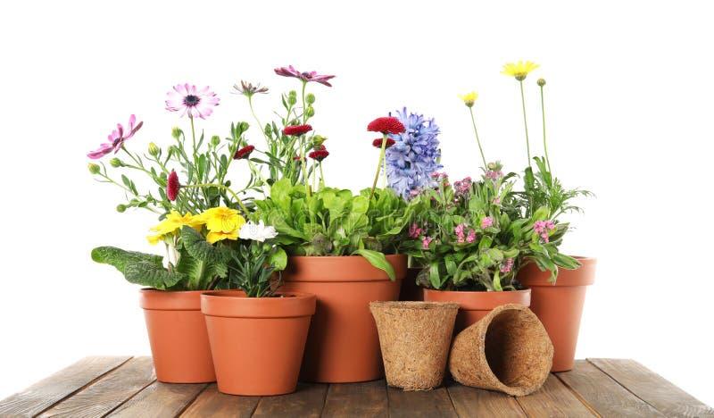 Flores de florescência em pasta e equipamento de jardinagem na tabela de madeira foto de stock
