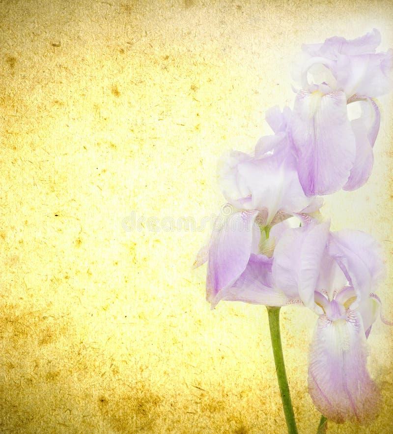 Flores de Grunge ilustração stock