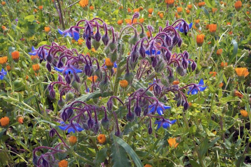 flores de hadas en el prado imágenes de archivo libres de regalías