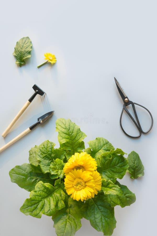 Flores de jardinagem no potenci?metro, nas tesouras e nas ferramentas no cinza ver?o e trabalho da mola no jardim horticulture fotos de stock royalty free
