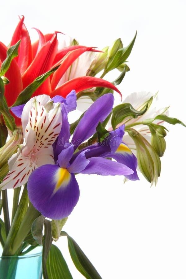 Flores de junio foto de archivo libre de regalías