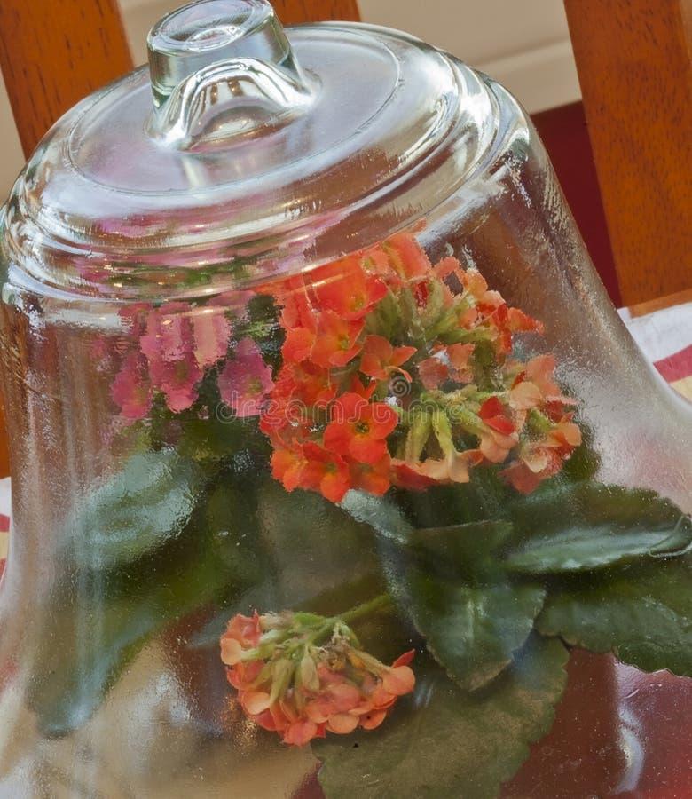 Flores de Kalanchoe debajo del vidrio foto de archivo