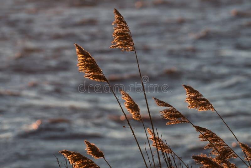 Flores de lámina secas de oro imagenes de archivo
