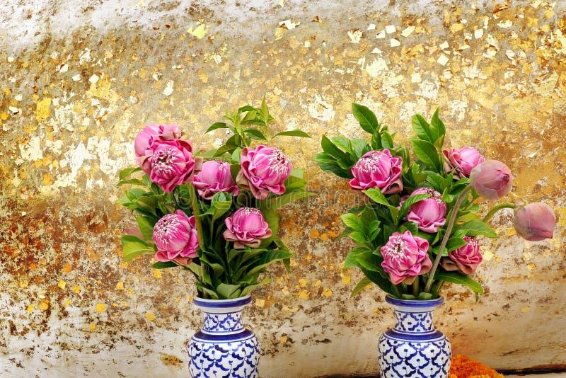 Flores de lótus cor-de-rosa em um vaso a adorar imagem de stock royalty free
