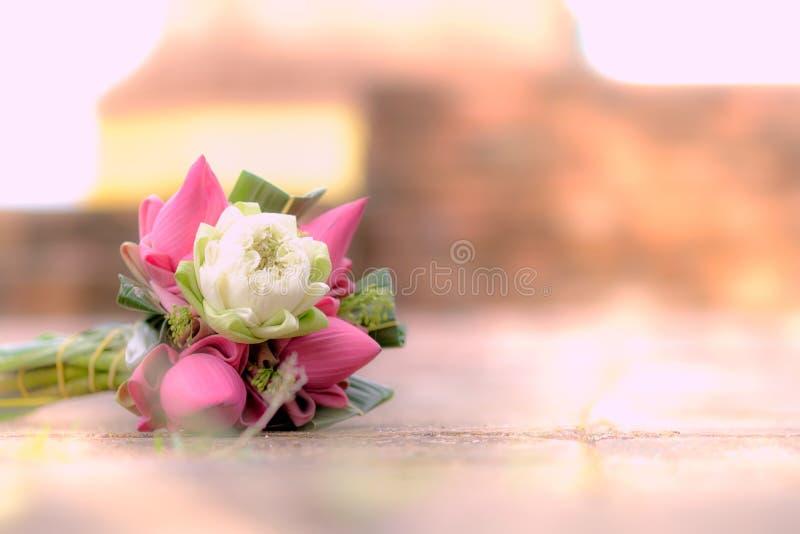 Flores de lótus cor-de-rosa e brancos frescas para a adoração em um templo velho foto de stock royalty free