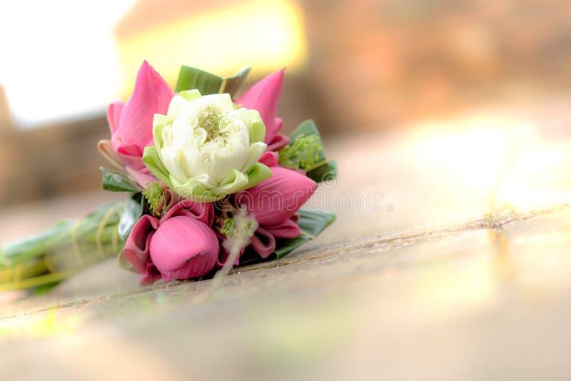 Flores de lótus cor-de-rosa e brancos frescas para a adoração em um templo velho imagem de stock royalty free