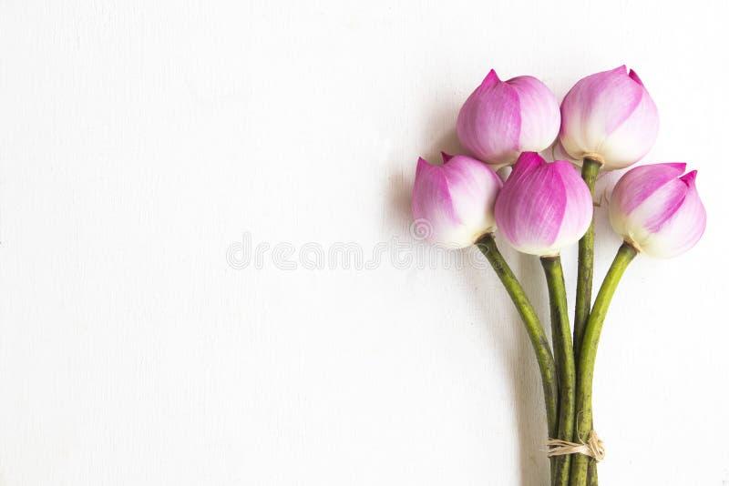 Flores de lótus cor-de-rosa locais da decoração de Ásia no branco imagem de stock