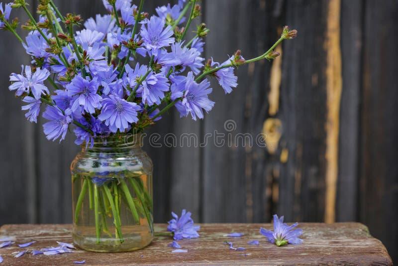 Flores de la achicoria en el envase de cristal fotografía de archivo
