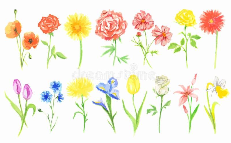 Flores de la acuarela fijadas ilustración del vector
