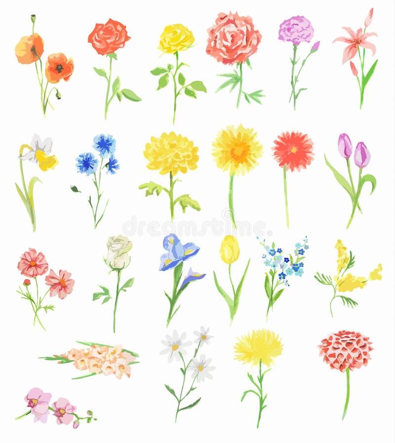 Flores de la acuarela fijadas stock de ilustración